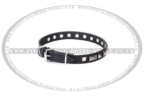 Dog Collar for American Staffy