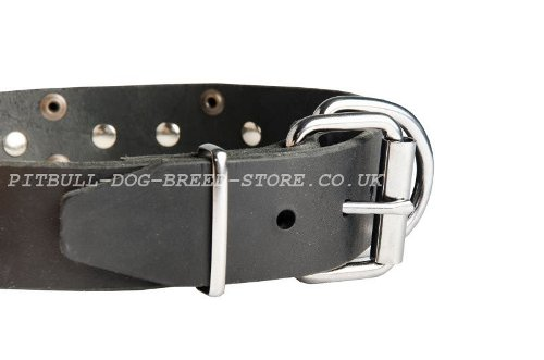 Decorative Dog Collars UK