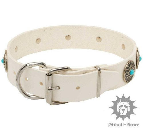 Dog Collar with Belt Buckle