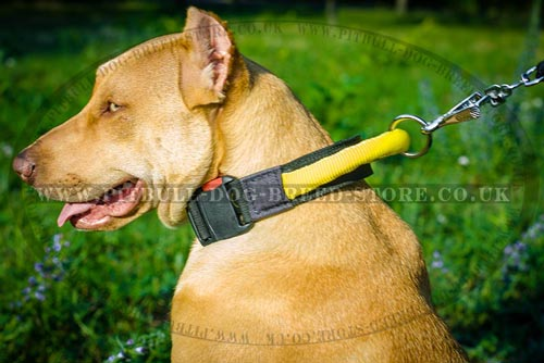 Dog Collar with Handle