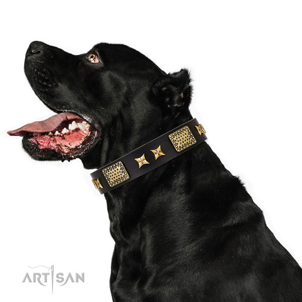 Dog Collars Large Breed