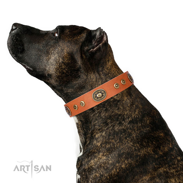 Dog Studded Collar