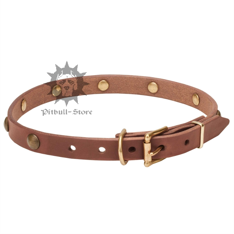 Thin Dog Collar Vintage Dog Collar 163 25 60