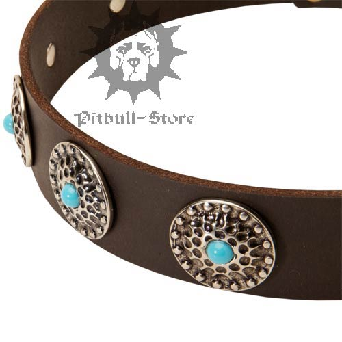 Elegant Dog Collar