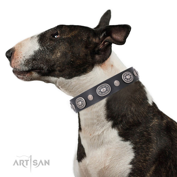 English Bull Terrier Collars