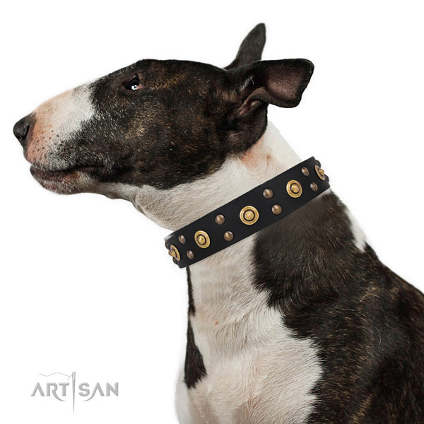 Stylish Royal Dog