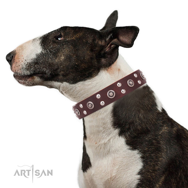 English Bull Terrier Collars UK