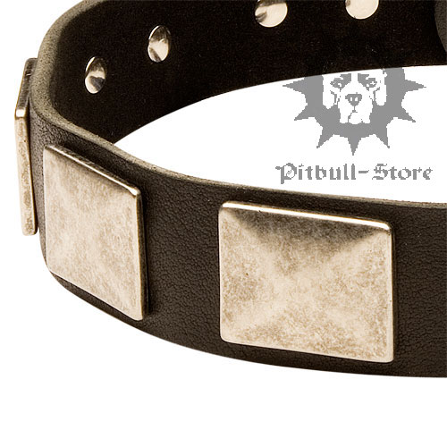 Funky Dog Collar