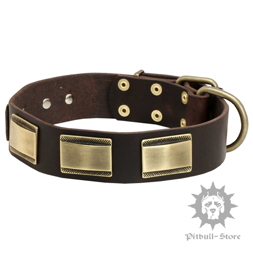 Dog Collar for Cane Corso