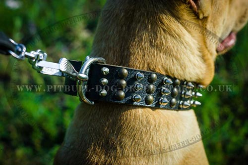 Fancy Dog Collar