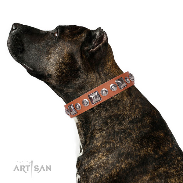 Good Dog Collar