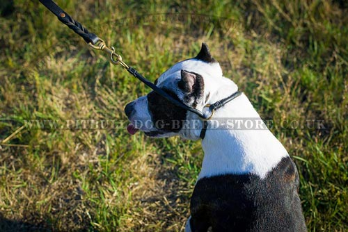 Best Choke Collars for Pitbulls