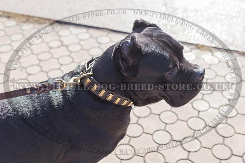 Leather Collar for Cane Corso