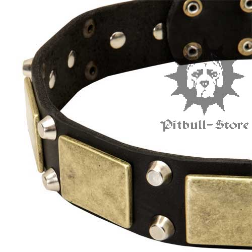 Leather Collar for Pitbull