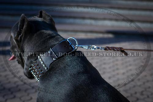 Leather Collars for Cane Corso