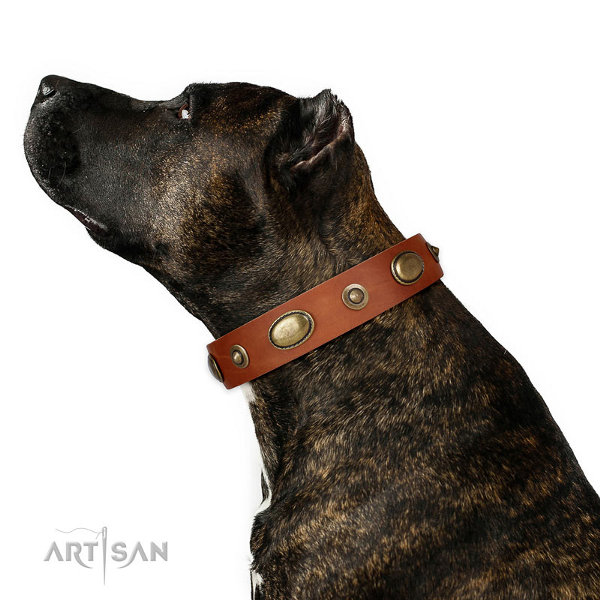 Leather Dog Collar Pitbull