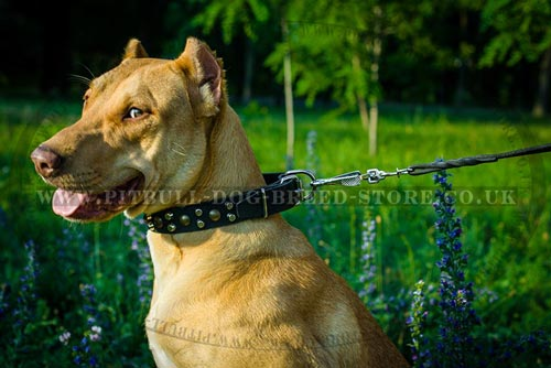 Leather Pitbull Collar