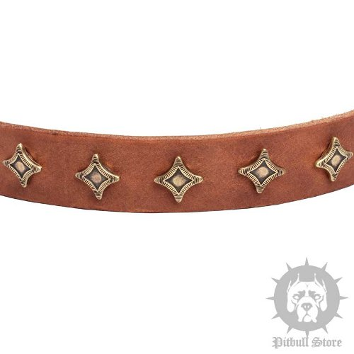 Leather Dog Collar Stars