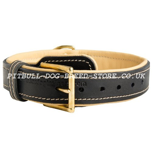 Strong Leather Dog Collar UK