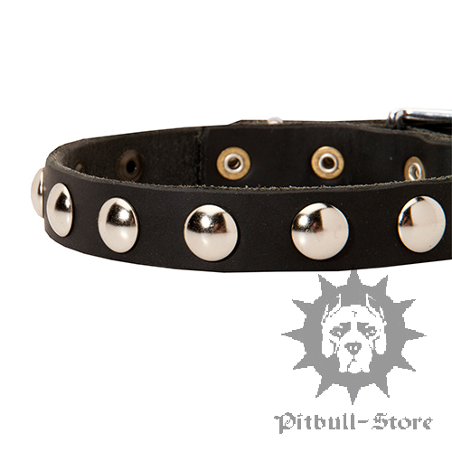 Narrow Dog collar
