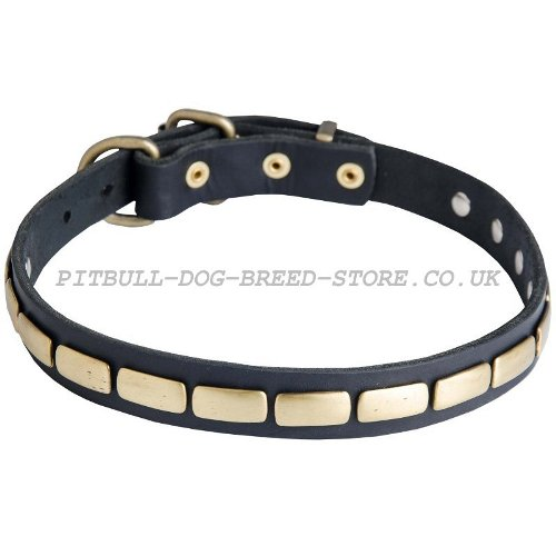 Narrow Dog Collar UK