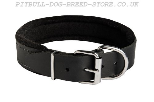 Soft Dog Collar UK