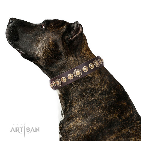 Perfect Dog Collar