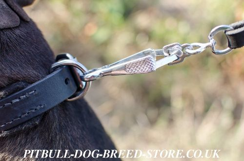 Pitbull Buckle Collar