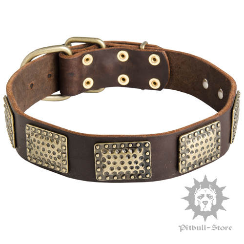 Pitbull Dog Collar