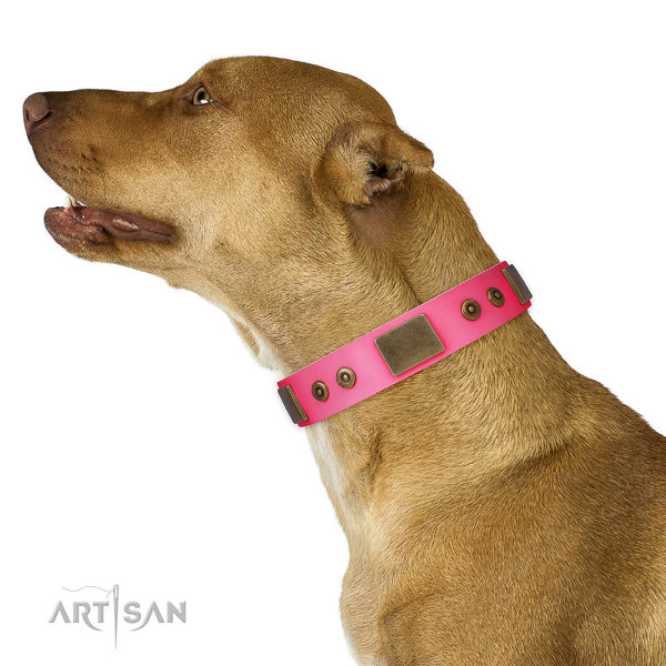 Pitbull Girl Collars