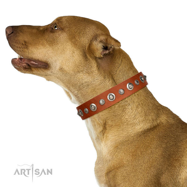 Pitbull Leather Dog Collar