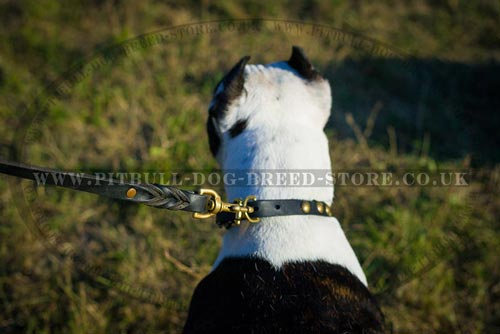 Puppy Collar UK