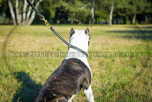 Best Choke Collar for Pitbulls
