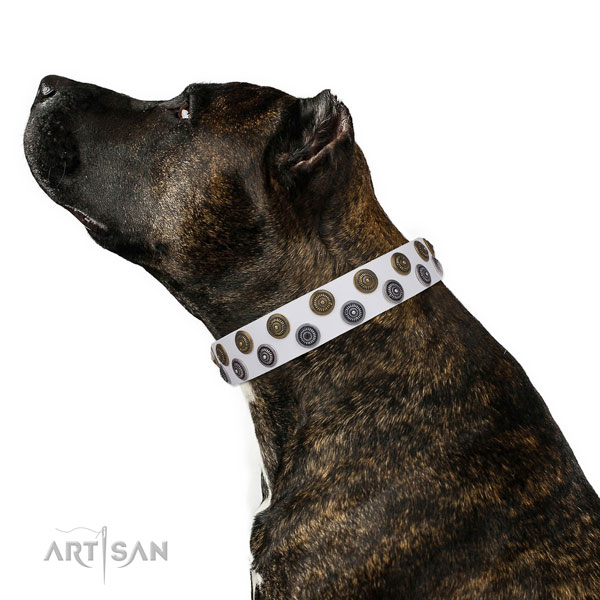 Wide Dog Collars