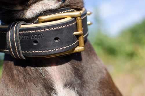 Dog Collar UK