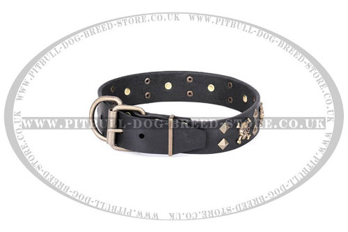 Staffordshire Bull Terrier Dog Collar