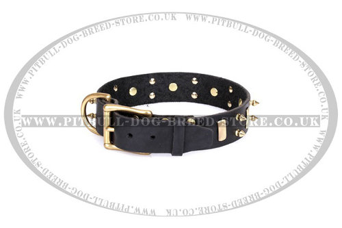 Stafforshire Bull Terrier Dog Collars UK