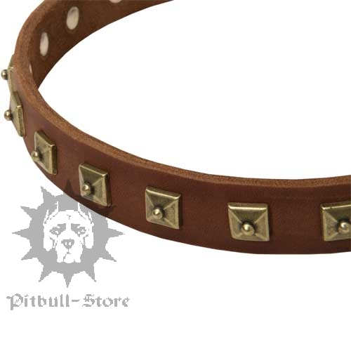 Exclusive Dog Collar