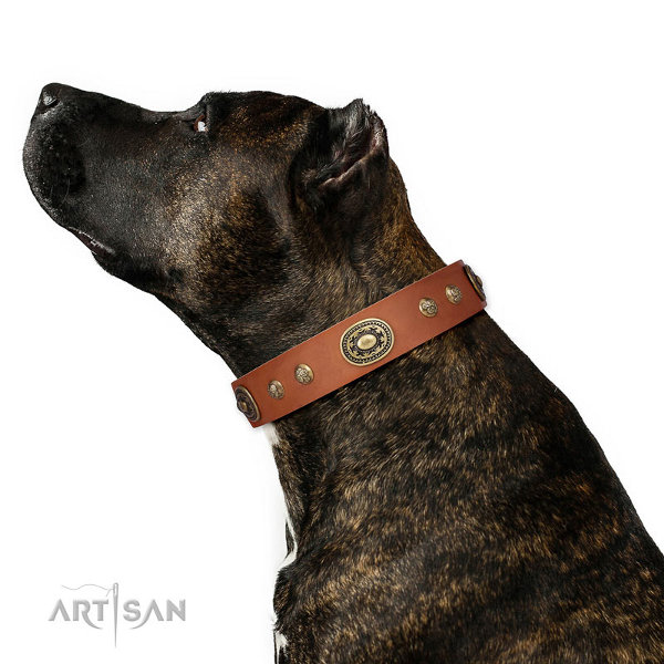 Staffordshire Leather Collar