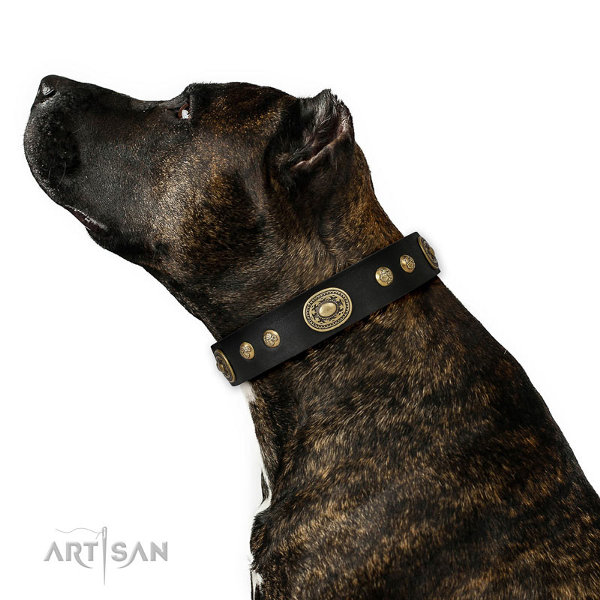 Staffordshire Leather Dog Collars