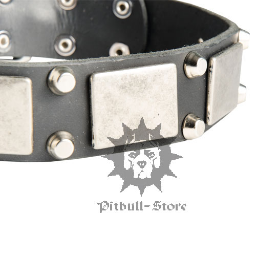 Staffy Dog Collar