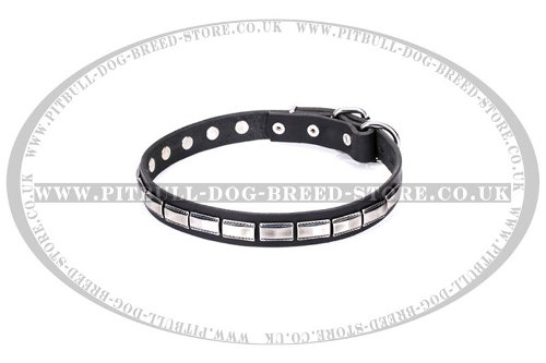Staffy Leather Dog Collar