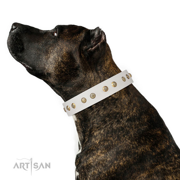 Staffy Leather Dog Collars