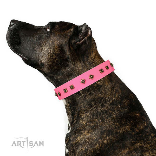 Pink Staffy Collars