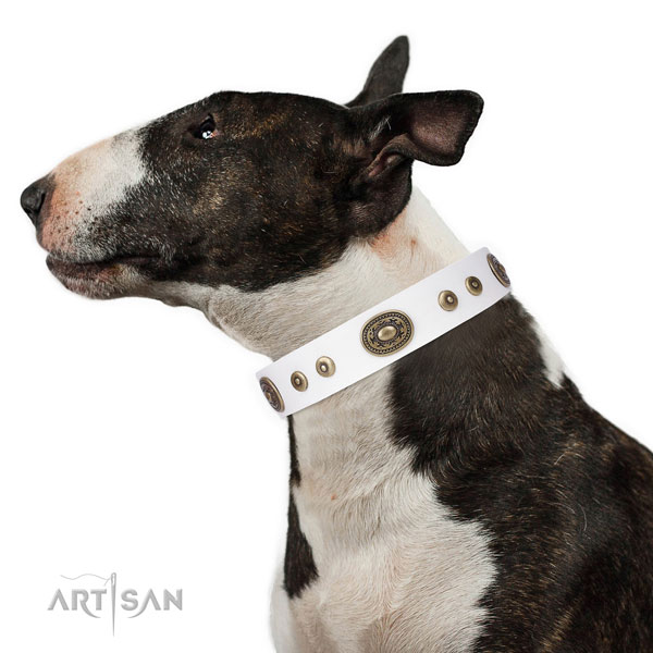 Pitbull Collars for Sale UK