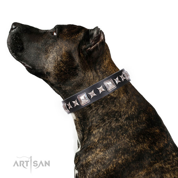 Studded Collar for Dogs