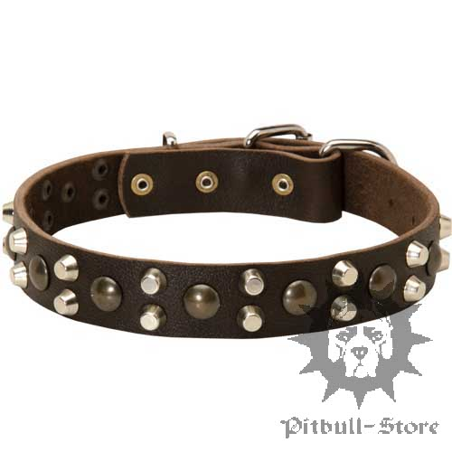 Great Bull Terrier Collar