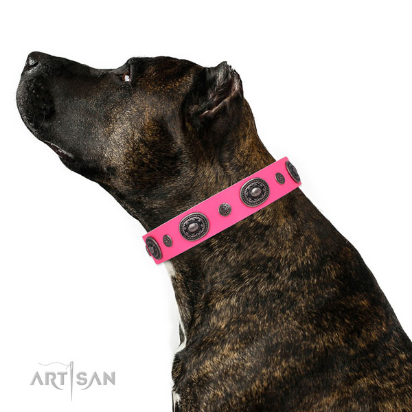 Studded Dog Collars for Staffies