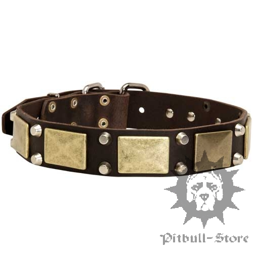 Stylish Dog Collar