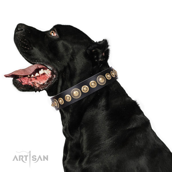 Thick Leather Dog Collars